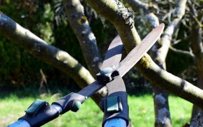 5 Steps for Tree Maintenance at Home